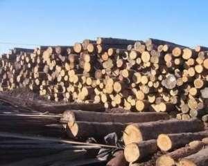 我国需求推动新西兰6月份木材出口大幅增长榆林